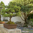 Bonsai Trees in Chinese Garden — Stock Photo