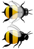 Bumble Bee Top and Side View Isolated on White — Stock Photo