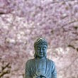 Sitting Full Body Buddha with Cherry Blossom Trees — Stock Photo