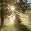 Foggy morning sun — Stock Photo