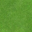 Green grass texture — Stock Photo #3939230