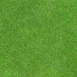 Foto de Stock  : Green grass texture
