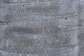 Chily wine palm bark background — Stock Photo