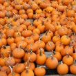 Many small pumpkins fill the frame - Stockfoto