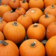 Many pumpkins fill the frame vertical - Stockfoto