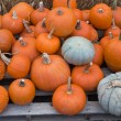 Different types of pumpkins for sale at a market - Foto de Stock