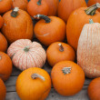 Various pumpkins for sale at a market — Stock Photo