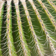 Close-up of barrel cactus spines - Stock Photo
