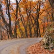Autumn road — Stock Photo #4970611