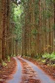 Forest autumn path — Stock Photo