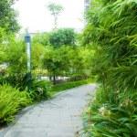 ������, ������: Tranquil Garden Walkway