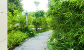 Tranquil Garden Walkway — Stock Photo