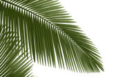 Green palm leaves — Stock Photo