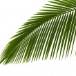 Stock Photo: Green palm leaves