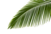 Green palm leaves — 图库照片