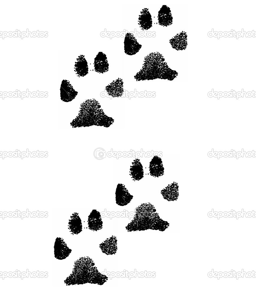 Black imprint of the paws different animal on white background — Stock Photo #4349800