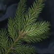 Stock Photo: Spruce still life