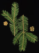 Spruce runes — Stock Photo