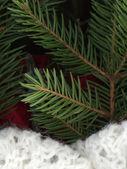 Spruce still life — Foto de Stock