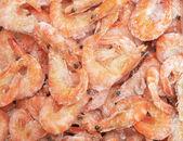 Of fresh prawns — Stock Photo