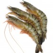 Fresh tiger shrimps on a white background — Stock Photo