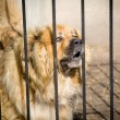 Malicious dog for iron a fence — Stock Photo