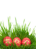 Easter eggs on a green grass — Stock Photo