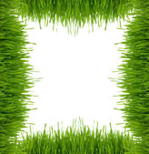 Framework from a green grass on a white background — Stock Photo