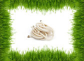Green grass on a white background and a rope — Stock Photo