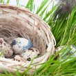 Quail eggs in a straw basket in a grass — Stock Photo