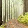 Misty path in early autumn forest - Stock Photo