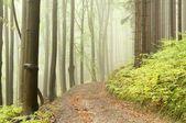 早期的秋季树林中朦胧路径 — 图库照片