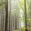 Beautiful early autumn forest — Stock Photo