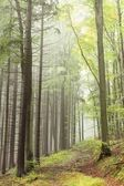 Beautiful early autumn forest — Foto Stock