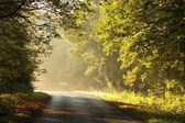 Autumn road in misty forest — Stock Photo