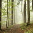 Misty path in early autumn forest — Stock Photo