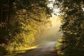 Path in a misty autumn forest at sunrise — Stock Photo