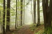 Misty path in early autumn forest — Stok fotoğraf