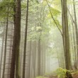 Path in misty autumnal forest — Stock Photo