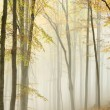 Picturesque path in misty autumn forest - Stock Photo