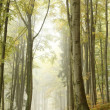 Mountain trail in foggy autumn forest — Stock Photo
