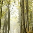 Mountain trail in foggy autumn forest - Stock Photo