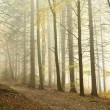 Path in misty autumn forest - Stock Photo