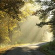 Autumn forest road at sunrise - Stock Photo
