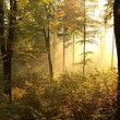 Picturesque autumn forest at dawn — Stock Photo