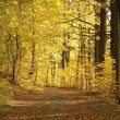 Path in beautiful autumn forest — Stock Photo