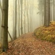 Misty forest path in a nature reserve — Stock Photo
