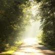 Stock Photo: Late sumer forest road in morning