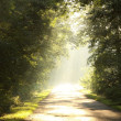Late sumer forest road in the morning — Stock Photo #4235312