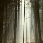 Autumn coniferous forest at sunrise — Stock Photo